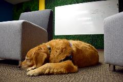 Staff members are encouraged to participate in bring-your-dog-to-work days several times a year